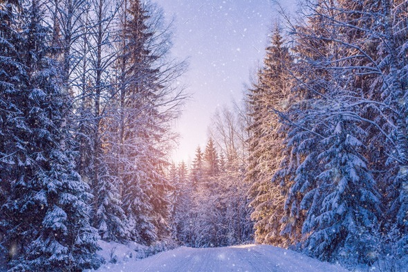 beautiful winter landscape: snowy forest on sunny day - Stock Photo - Images
