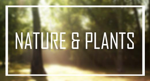 Nature &  Plants