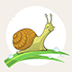 Cartoon Snail on Grass - GraphicRiver Item for Sale