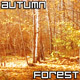 Sunlight Yellow Autumn Forest - VideoHive Item for Sale
