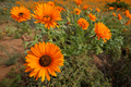 Wild flowers - South Africa - PhotoDune Item for Sale