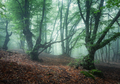 Mystical spring forest in fog. Old trees in clouds - PhotoDune Item for Sale