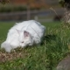 Maine Coon White Cat In The Wild - VideoHive Item for Sale