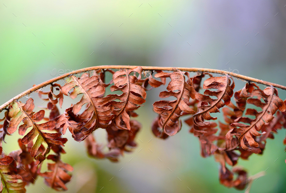 Dry leaves of a fern. Autumn background. - Stock Photo - Images