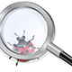 Magnifying Glass and Ladybug - GraphicRiver Item for Sale