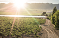 Vineyards and irrigation canal - PhotoDune Item for Sale