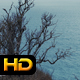 Coast in Autumn - VideoHive Item for Sale