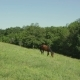 Horse Grazing In a Meadow - VideoHive Item for Sale