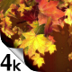 Falling Leaves 4K - VideoHive Item for Sale