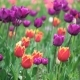 Field Of Spring Flowers - VideoHive Item for Sale