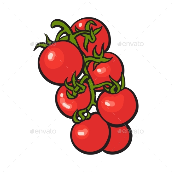 Sketch Style Drawing of Shiny Ripe Red Cherry - Food Objects