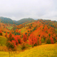 Autumn landscape with scenic colorful view of meadows and trees - PhotoDune Item for Sale