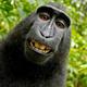 Monkey - AudioJungle Item for Sale