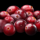 Superpositioned pile of cranberries - PhotoDune Item for Sale