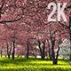 Sakura Garden - VideoHive Item for Sale