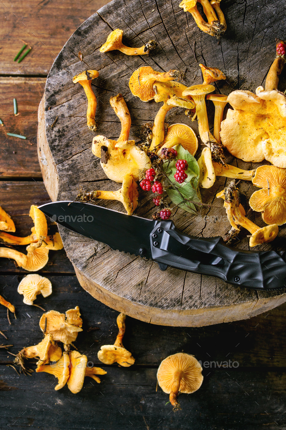 Forrest chanterelle mushrooms - Stock Photo - Images