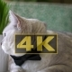 Concepts And Ideas Cat In Black Bow Tie With Big Round Green Eyes Like Big Boss - VideoHive Item for Sale