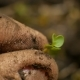 The Farmers Hands With Plant In The Earth - VideoHive Item for Sale