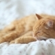 Cute Ginger Cat Lying In Bed. Fluffy Pet Looks Sleepy. Cozy Home Background. - VideoHive Item for Sale