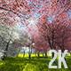 Japanese Sakura Garden - VideoHive Item for Sale