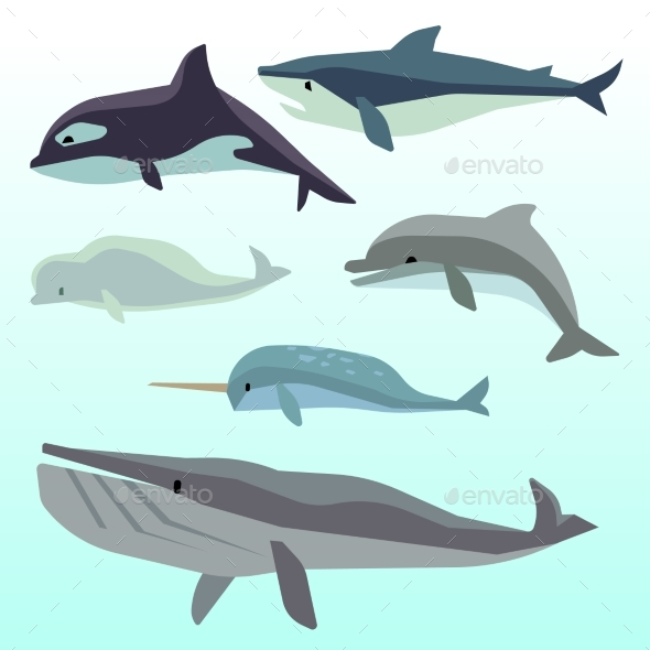 Whales And Dolphins, Marine Underwater Mammal - Animals Characters