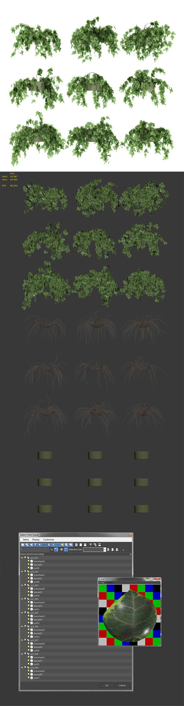 Ivy in pot. 9 models - 3DOcean Item for Sale
