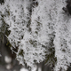 Close-up view of ice crystals on spruce needles. - PhotoDune Item for Sale