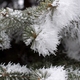 Pine branches covered with hoarfrost. Small deep of field - PhotoDune Item for Sale