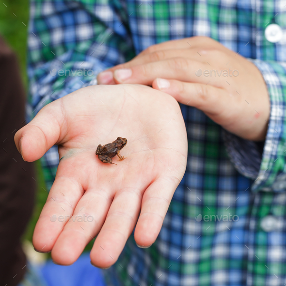 Boy holds in the palm of a small frog - Stock Photo - Images
