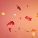 Falling Autumn Leaves (3-pack) - VideoHive Item for Sale