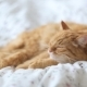 Cute Ginger Cat Lying In Bed - VideoHive Item for Sale