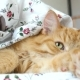 Cute Ginger Cat Lying In Bed Under a Blanket. Fluffy Pet Comfortably Settled To Sleep - VideoHive Item for Sale