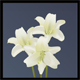 Easter Lillies - GraphicRiver Item for Sale