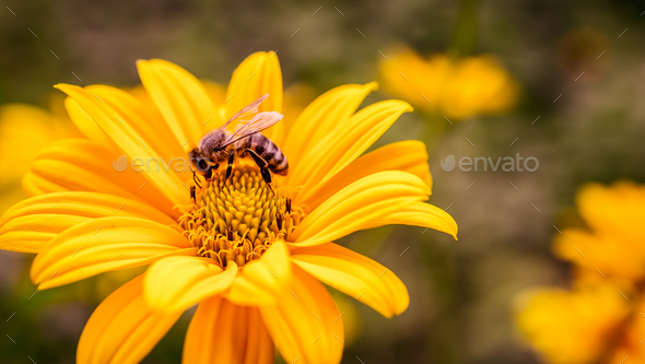 Yellow flower with bee inside - Stock Photo - Images