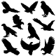 Eagles Silhouettes - GraphicRiver Item for Sale