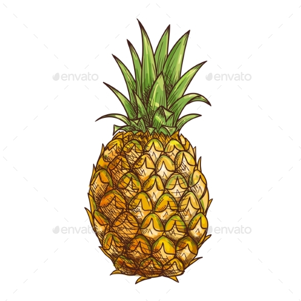 Pineapple Exotci Tropical Fruit Isolated Sketch - Food Objects