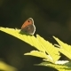 Butterfly On Graan Plants In Sunny Spring Day - VideoHive Item for Sale