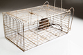 Metal cage with a trapped rat