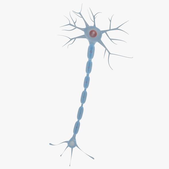 Neuron 01 - 3DOcean Item for Sale