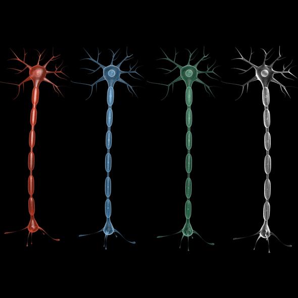 Neuron 02 - 3DOcean Item for Sale
