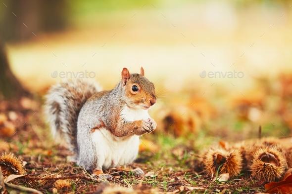 Cute squirrel in autumn scene - Stock Photo - Images