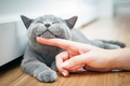 Happy kitten likes being stroked by woman's hand.