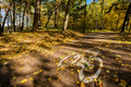 Bike road sign in a park on autumn - PhotoDune Item for Sale