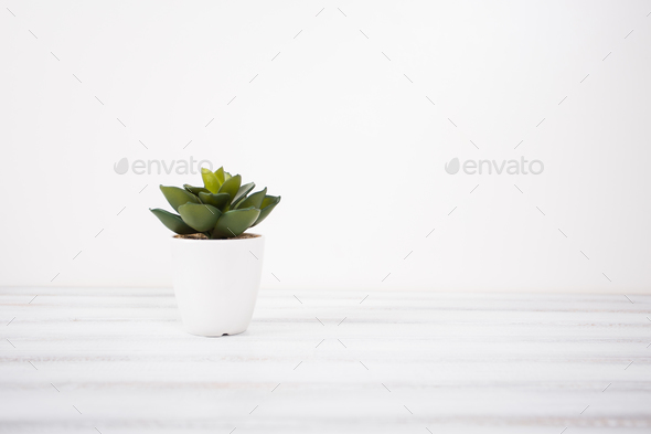 Small artificial indoor plant on a white background - Stock Photo - Images