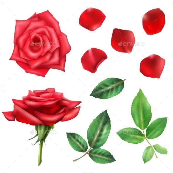 Rose Flower and Petals Set - Flowers & Plants Nature