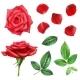 Rose Flower and Petals Set