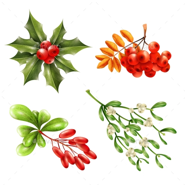Christmas Berry Branches Set - Flowers & Plants Nature