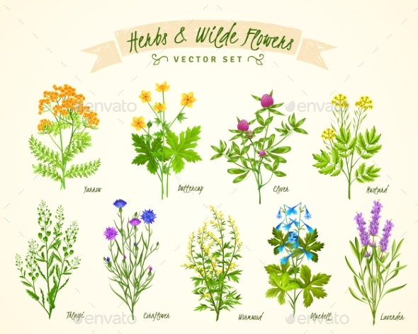 Herbs and Wild Flowers Background Set - Flowers & Plants Nature