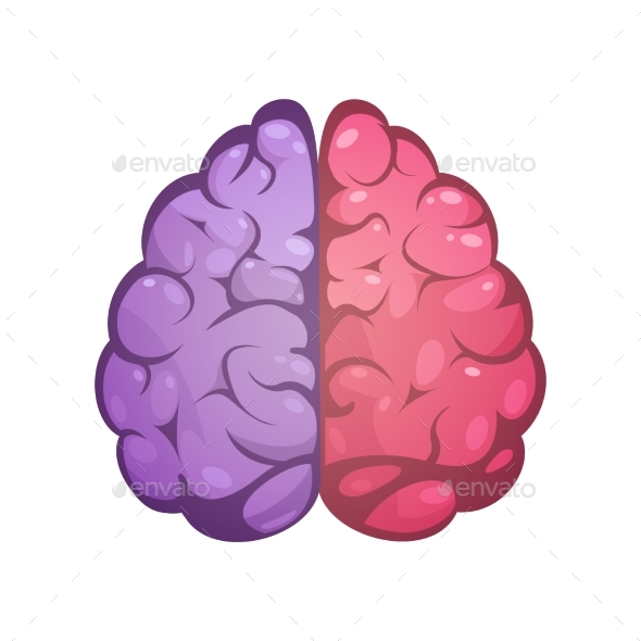 Right and Left Brain Symbolic Image - Organic Objects Objects