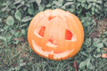 Halloween.  Close up of one Jack-o-Lantern. scary pumpkin with a smile  in green forest, outdoor.